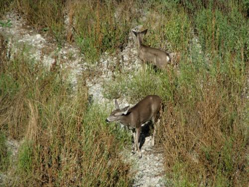 Los Padres National Forest Santa Ynez River Santa Barbara Hike Deer Aliso Canyon Sage Hill