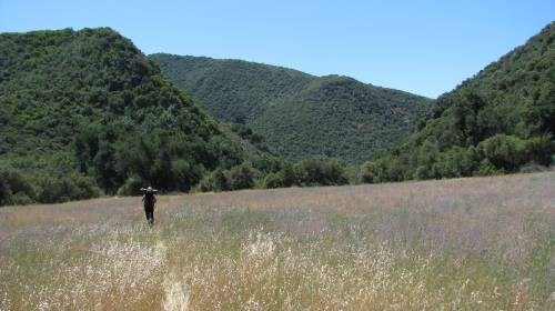 Los Padres National Forest Dick Smith Wilderness Hike