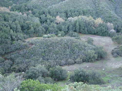 Los Padres National Forest Santa Barbara Backcountry Hike Forbush Flats Santa Ynez Mountains Cold Springs Trail