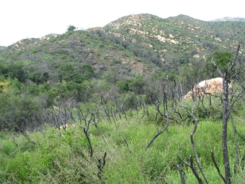 Los Padres National Forest Santa Barbara Hike Rattlesnake Canyon Santa Ynez Mountains