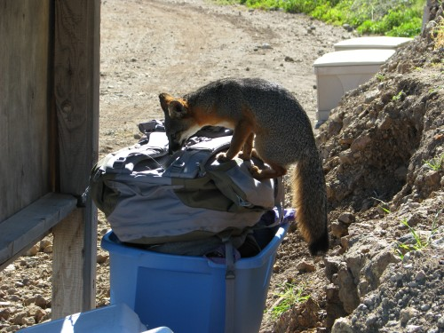 Santa Cruz Island Fox Channel Islands National Park Scorpion Anchorage