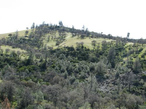 Los Padres National Forest Birabent Canyon Figueroa Mountain Ballard Camp Santa Barbara Day Hike