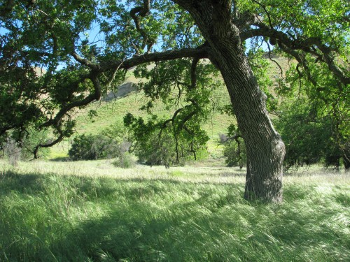 Los Padres National Forest Manzana Schoolhouse Sisquoc River Santa Barbara Backcountry San Rafael Wilderness