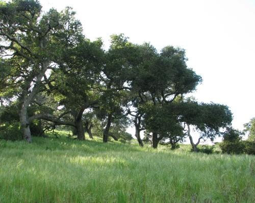 """Gaviota State Park"" ""Santa Ynez Mountains"" ""Santa Barbara"" ""Las Cruces Trail"" ""Overlook Fire Road"""