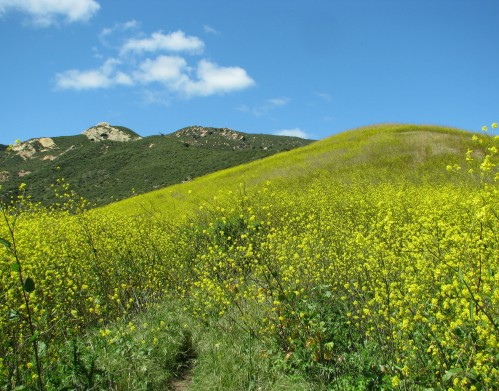 """Gaviota State Park"" ""Santa Ynez Mountains"" ""Wild Mustard"" ""Santa Barbara"" ""Beach to Backcountry Trail"" hike"