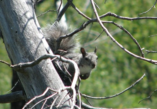 Los Padres National Forest Santa Barbara Backcountry Davy Brown Squirrel Munch Valley Trail