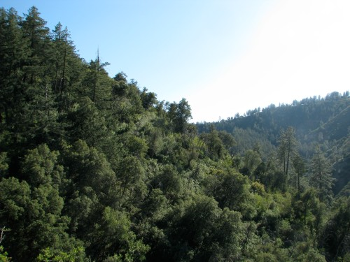 Los Padres National Forest Fir Canyon Davy Brown