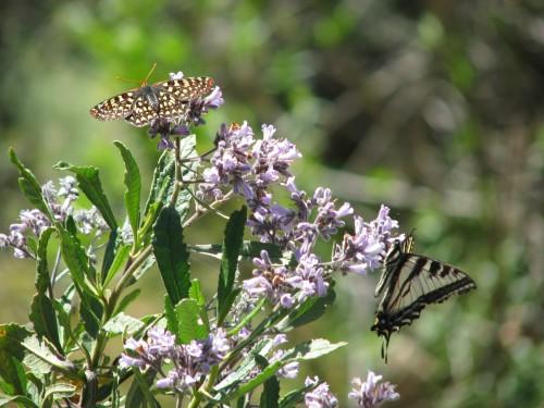 Los Padres National Forest Manzana Narrows San Rafael Wilderness Santa Barbara Hike