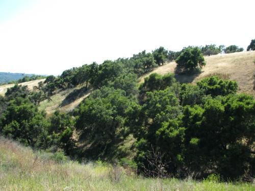 San Marcos Foothills Preserve Santa Barbara Hike Santa Ynez Mountains