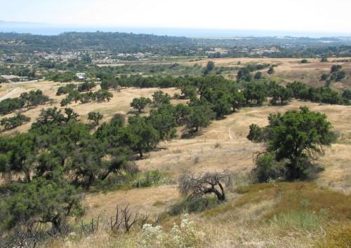 San Marcos Foothills Preserve Santa Barbara Hike Santa Ynez Mountains Oaks