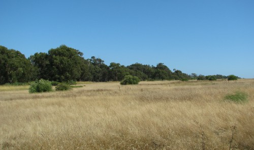 Ellwood Bluffs Santa Barbara