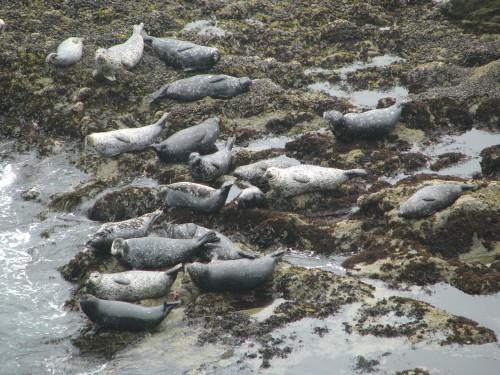 Seals Point Sal Pacific Ocean Santa Maria Hike