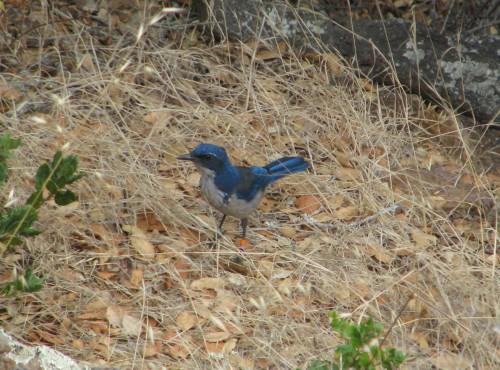 Santa Cruz Island Jay Pelican Bay Channel National Park Hike