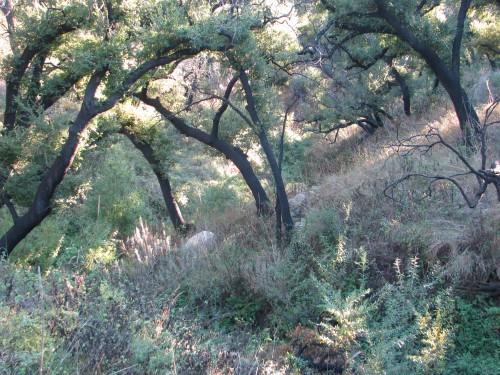 Parma Park east west Santa Barbara Hike Trail