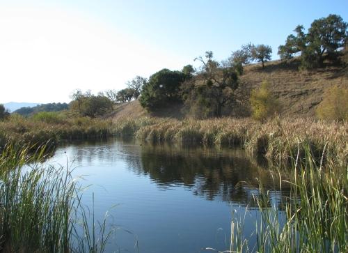 Pond Sedgwick  Reserve Santa Ynez Valley Hike