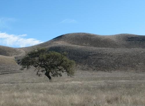 Oak Sedgwick Reserve Santa Ynez Valley Hik