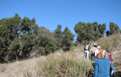Edible Medicinal Plants Class Hike Santa Barbara Parma Park