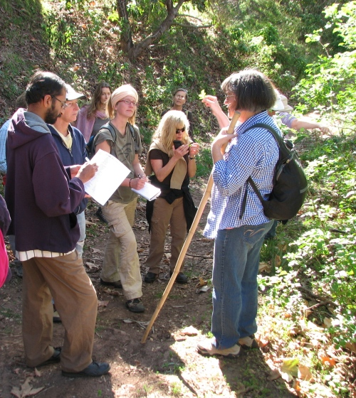 Edible Medicinal Plants Class Santa Barbara Trail Hike