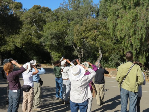 Audubon Bird Walk Santa Barbara Museum of Natural History