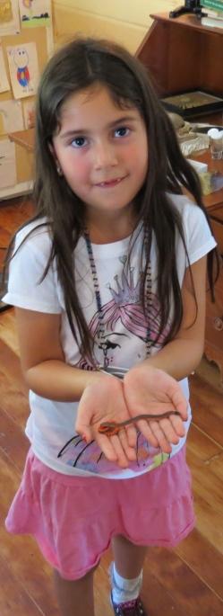 Santa Barbra Museum of Natural History backyard snake