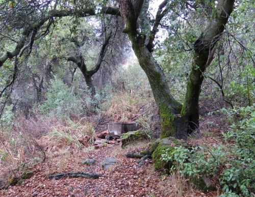 Little Pine Spring Mountain Santa Cruz Trail Los Padres National Forest Santa Barbara hiking backpacking