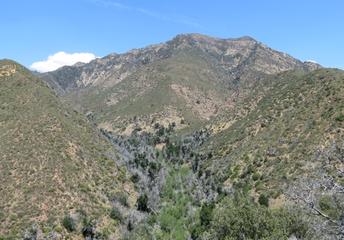 Looking up Alamar Canyon towards Madulce Peak