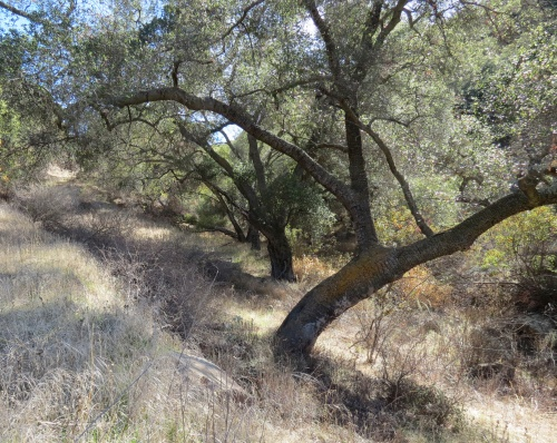 Foothill Trail Cozy Dell Ojai hike los Padres National Forest