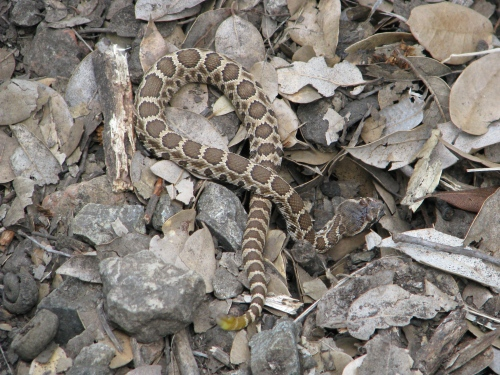 Davy Brown Trail Rattlesnake Los Padres National Forest Santa Barbara hike