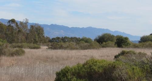 Ellwood Mesa Open Space Santa Barbara Goleta hike trail Sperling Preserve shores monarch butterflies butterfly