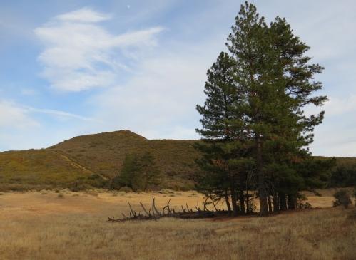 Dry Lakes Ridge Botanical Area Trail Ojai Hike Los Padres National Forest