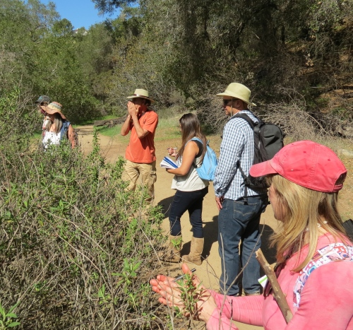Lanny Kaufer Herb Walks Santa Barbara trail hike ventura ojai native plants