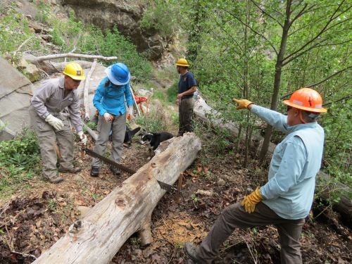 los padres forest association volunteer trail work backcountry