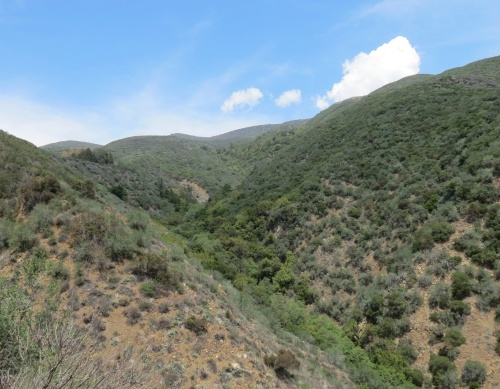 The Pines Horn Canyon Thacher Scholl Los Padres National Forest Ojai hiking  trail