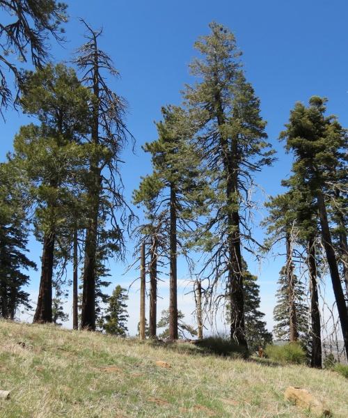 Big Pine Mountain hike trail Santa Barbara Los Padres National Forest