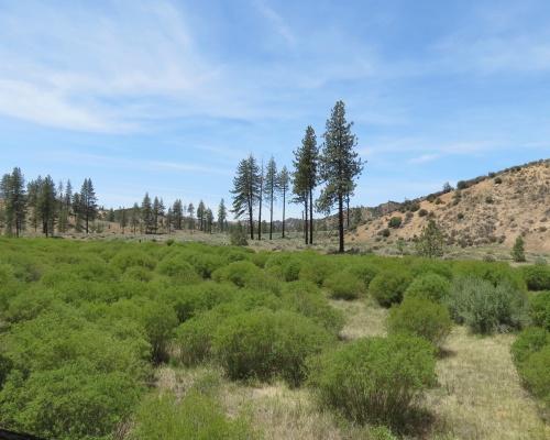 Piru Creek Sespe Wilderness Ojai Fishbowls Trail hike camp Grade Valley Lockwood