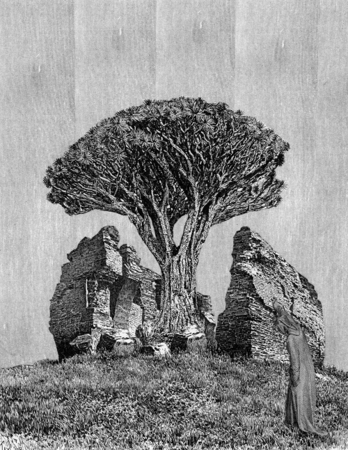etching engraving collage dragonblood tree ruin