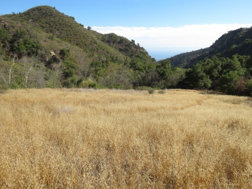 Rattlesnake Trail Canyon hike Santa Barbara Tin Can Meadow