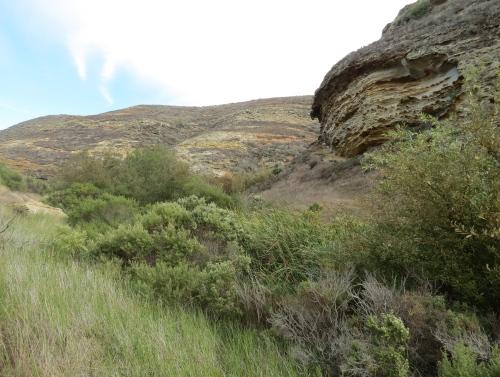 Lobo Canyon hike trail Santa Rosa Island Channel Islands National Park