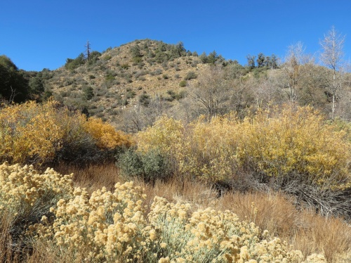 Reyes Creek Campground Bear Trail Sespe Wilderness Los Padres National Forest Gene Marshall Piedra Blanca