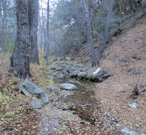 Beartrap Creek Canyon Campground Los Padres National Forest Sespe Wilderness Hike Gene Marshall Piedra Blanca Trail