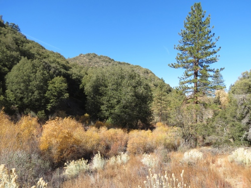 Beartrap Creek Canyon Campground Gene Marshall Piedra Blanca Trail Sespe Wilderness Los Padres National Forest hike