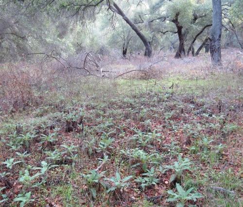 Willis Canyon Trail Ventura River Preserve ojai hiking