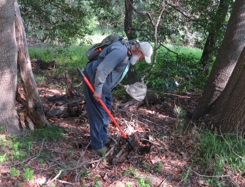 Dr. Samuel Sweet UCSB herpetology reptiles amphibians arroyo hondo walk