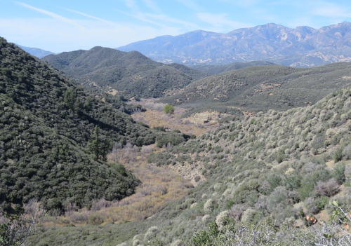 Lion Canyon Trail Ojai hiking backpacking Rose Valley Los Padres National Forest