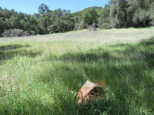 Roderick Show Camp Ynez Forbush Canyon Trail Los Padres National Forest hiking Santa Barbara