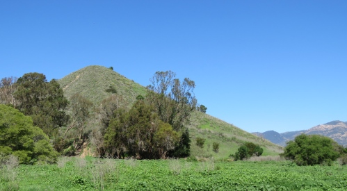 Arroyo Burro Open Space Santa Barbara City Park trail hike Veronica Meadows Spring Creek