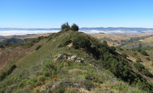 Alan Peak Trail Montaña de Oro hik Coon Creek Valencia Peak Oats