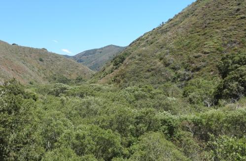 Coon Creek Trail hike montaña de oro