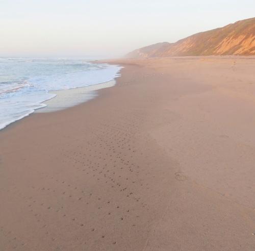 Bird track Surf Beach lompoc hike