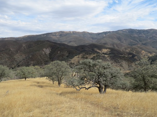 Sierra Madre Mountains Indians Trail Pine Canyon Los Padres National Forest hike